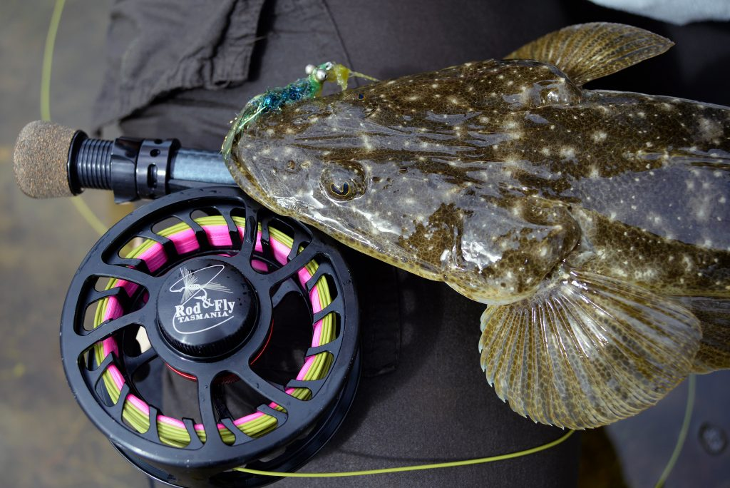 Flathead are a perfect target for fly fishing and don't require fancy, specialised gear.
